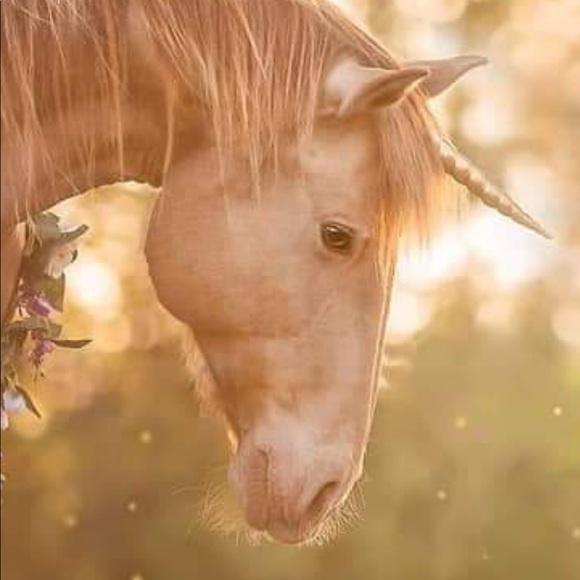 pink_moose